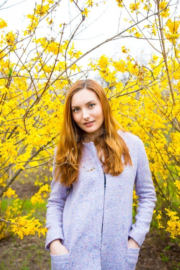 Jovem mulher ruivo bonita que está perto de Forsythi de florescência fotografia de stock