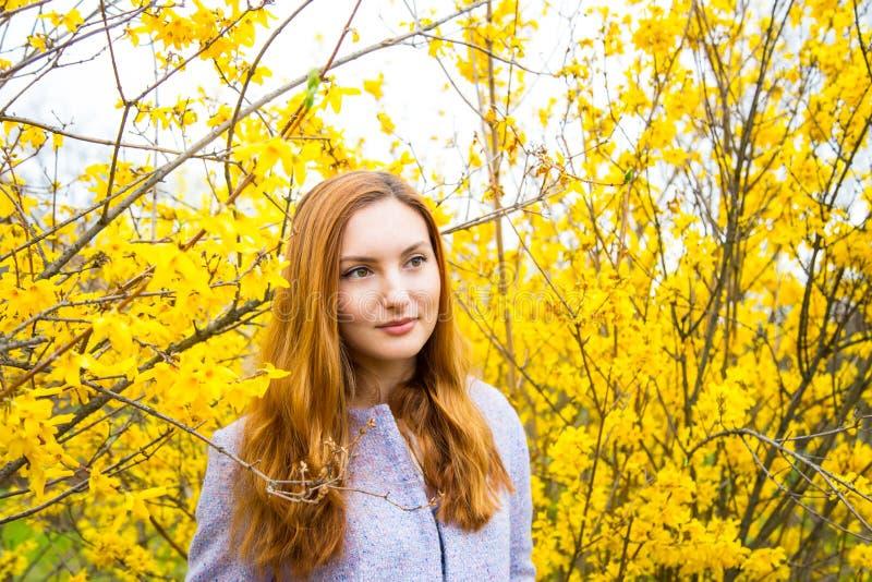 Jovem mulher ruivo bonita que está perto de Forsythi de florescência imagens de stock royalty free