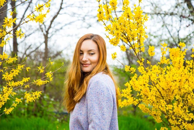 Jovem mulher ruivo bonita que está perto de Forsythi de florescência imagem de stock royalty free