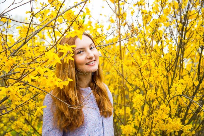 Jovem mulher ruivo bonita que está perto de Forsythi de florescência fotografia de stock royalty free