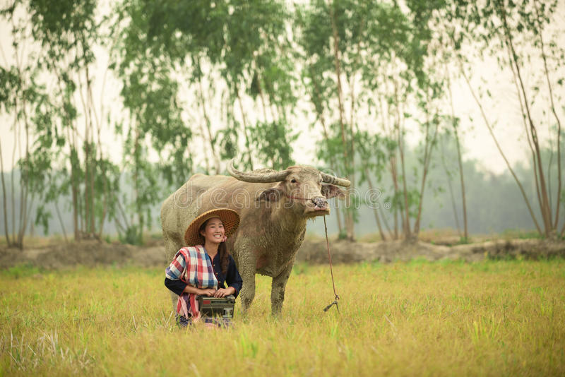 A jovem senhora asiática senta-se ao lado do búfalo e guarda-se o rádio foto de stock royalty free
