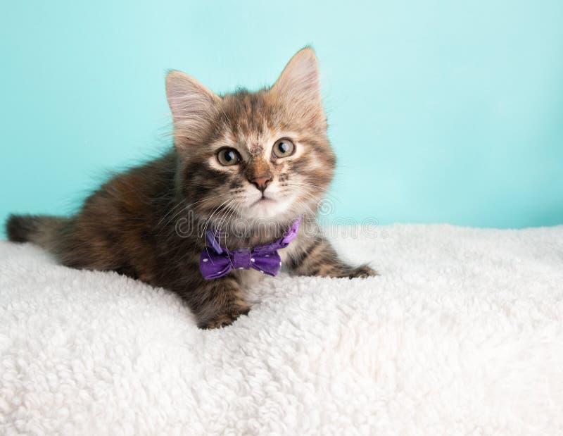 Jovens macios bonitos Tabby Kitten Rescue Cat Wearing Purple e laço pontilhado Poka branco que encontra-se para baixo olhando à d imagem de stock royalty free