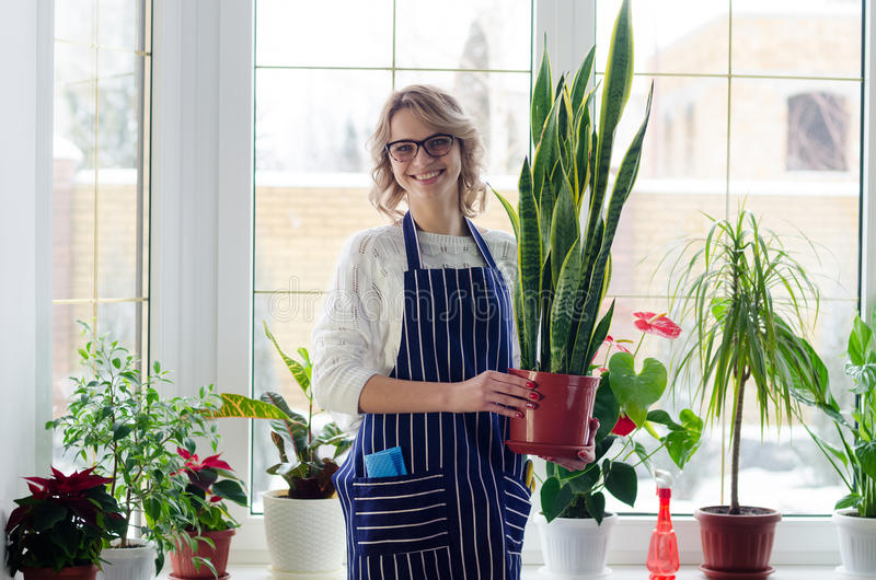 Jovens na mulher dos vidros que cultiva as plantas home imagem de stock royalty free
