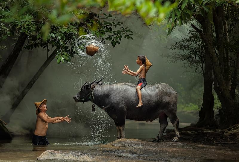 The joy of children with buffalo in the river. stock images