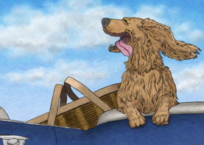 Joy Ride. Happy dog with tongue out and ears flapping is riding in a convertible beside a picnic basket vector illustration