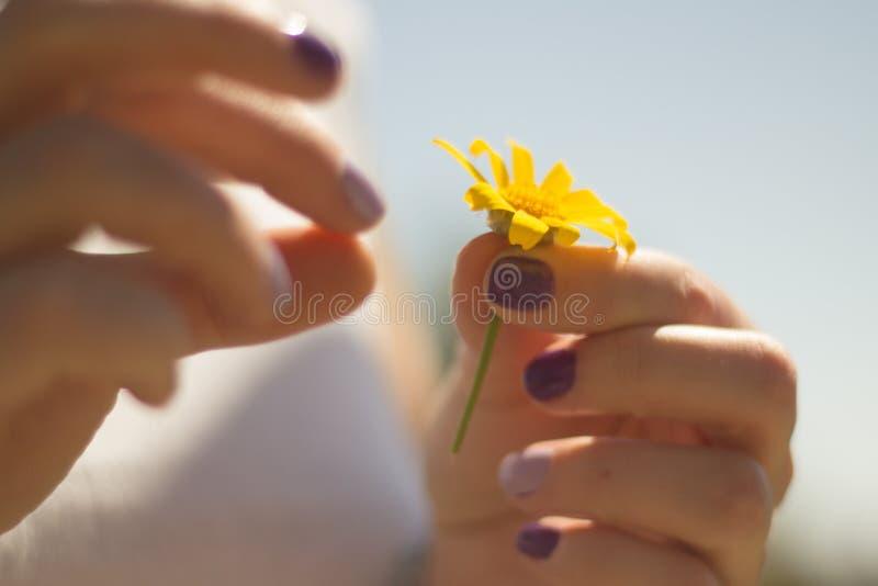 Joy Spring flowering. royalty free stock image