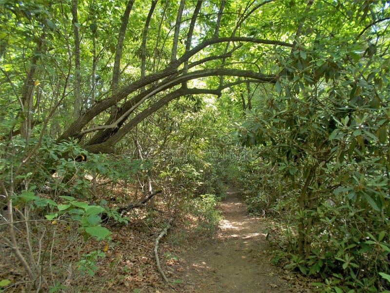 Joyce Kilmer Memorial Forest Hiking slinga arkivbild