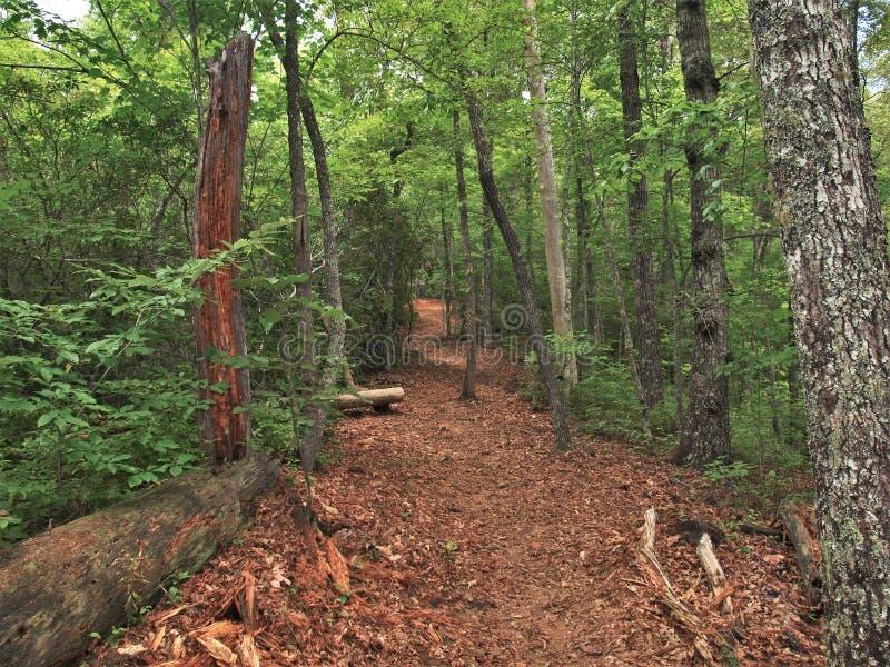 Joyce Kilmer Memorial Forest Hiking slinga royaltyfria foton