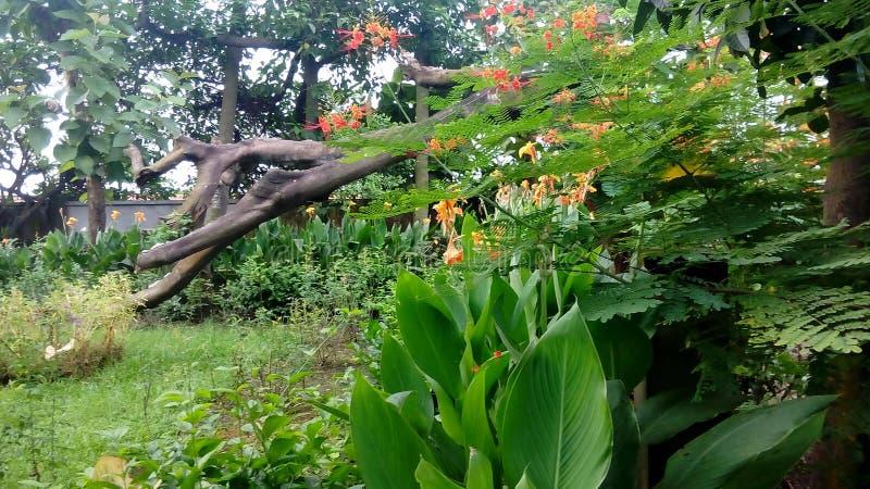 Joydebpur Banglobari fotos de stock royalty free