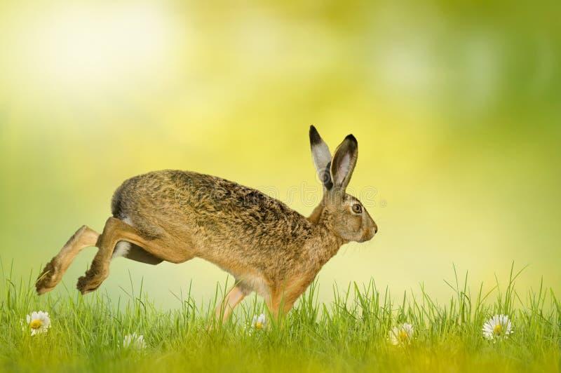 Joyeuses Pâques ; lapin de Pâques image libre de droits