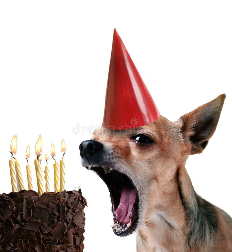 Joyeux anniversaire ! photos stock