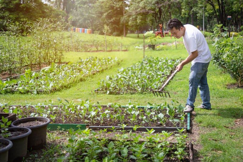 Joyeux homme asiatique travaillant avec l'outil du râteau dans un jardin bio, les gens d'âge moyen cultivent des légumes en été,  photo stock