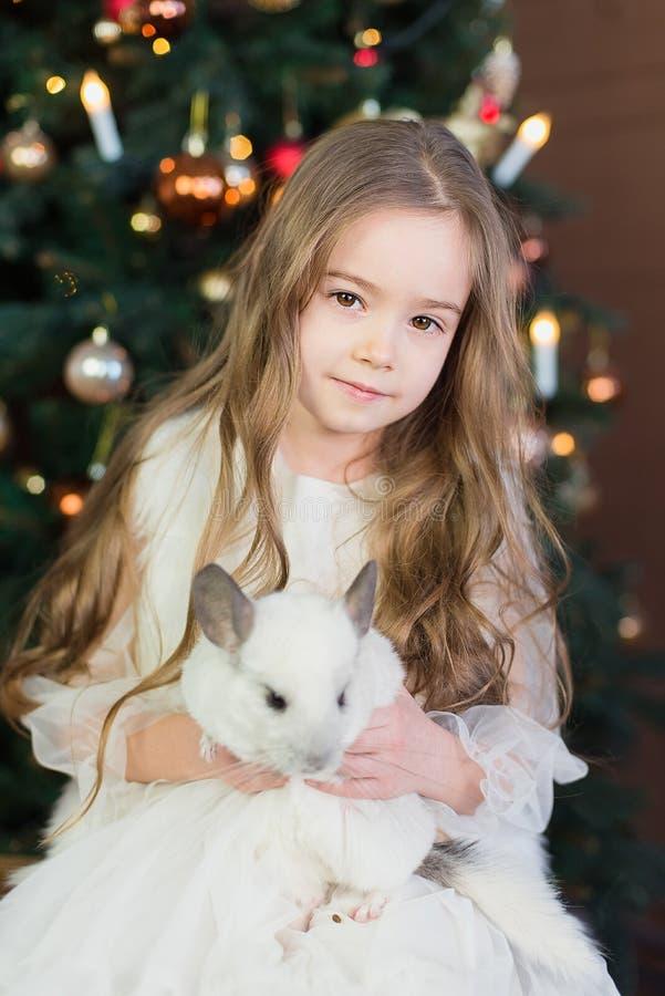 Joyeux Nouvel An chinois 2020 de rat Portrait de chinchilla blanche mignonne sur le fond de l'arbre de Noël photographie stock libre de droits