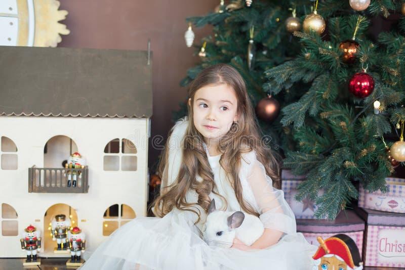 Joyeux Nouvel An chinois 2020 de rat Portrait de chinchilla blanche mignonne sur le fond de l'arbre de Noël images stock