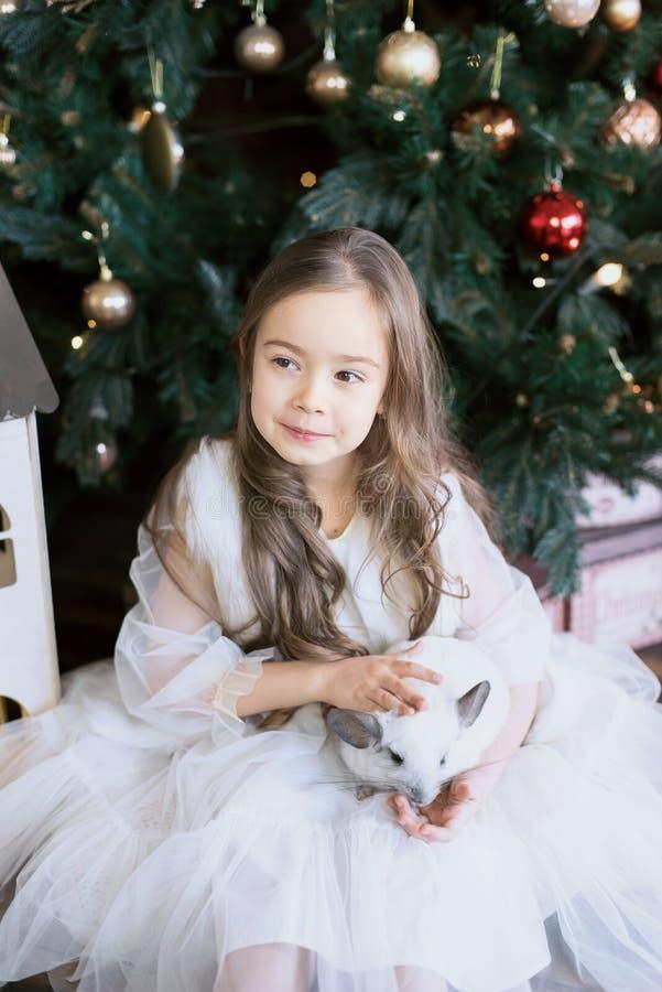 Joyeux Nouvel An chinois 2020 de rat Portrait de chinchilla blanche mignonne sur le fond de l'arbre de Noël photos stock
