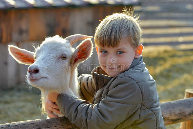 Joyful and happy boy hugs and strokes a horned goat, the concept of the unity of nature and man.  stock photography