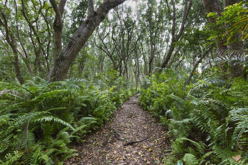 Jozani森林,桑给巴尔,坦桑尼亚 库存照片