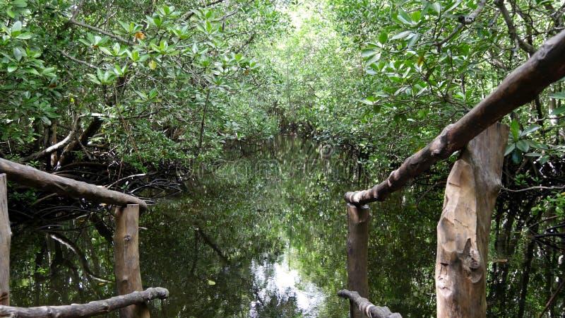Jozani skog, Zanzibar royaltyfria bilder