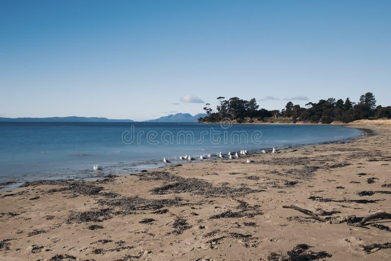 Jubileumstrand in de stad van Swansea, Tasmanige stock afbeelding