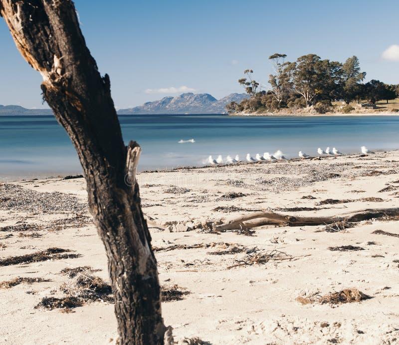 Jubileumstrand in de stad van Swansea, Tasmanige stock foto's