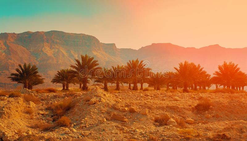 Judean沙漠在日落的以色列 库存图片