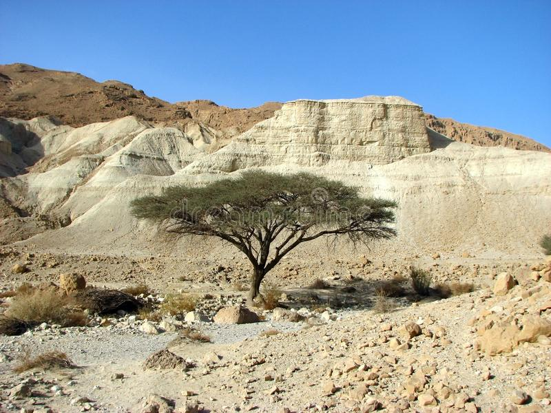 Download Judean Desert stock photo. Image of extreme, east, israel - 12393216