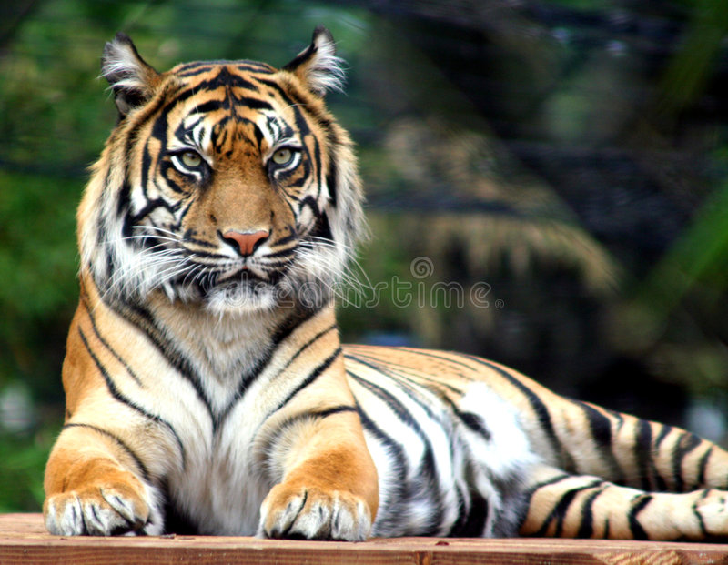 Download The Judge stock photo. Image of predator, wild, east, endangered - 225584