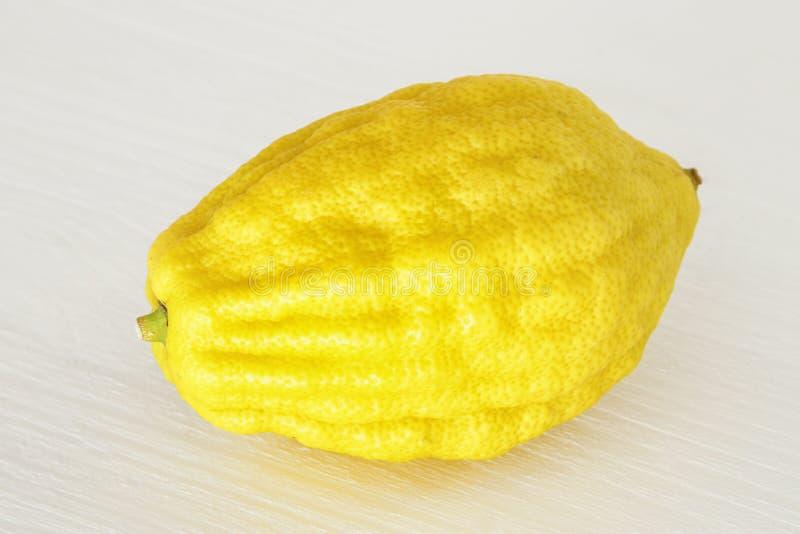 Judisk festival av Sukkot Etrog LemonTraditional symbol ett av den fyra arten över vit träbakgrund arkivfoto