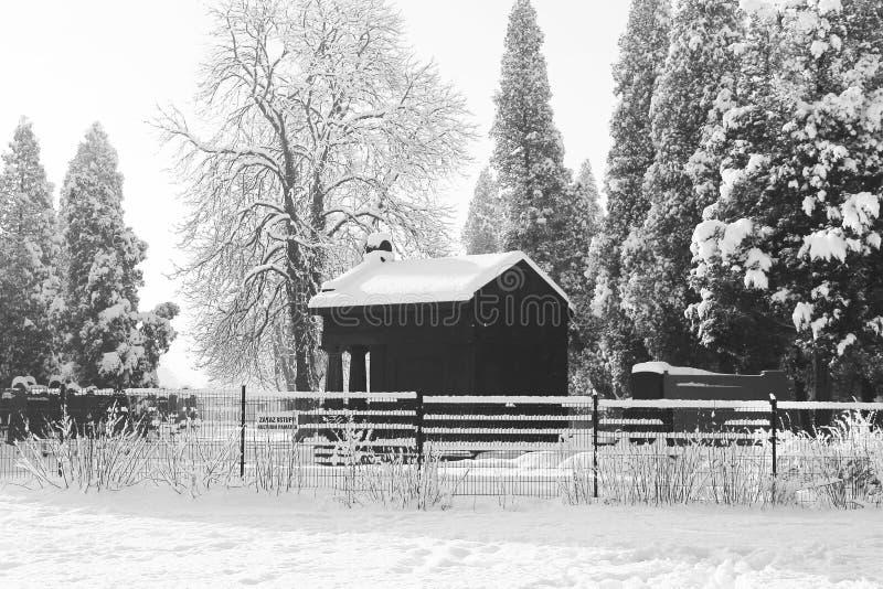 Judisk kyrkogård i vinter arkivbild