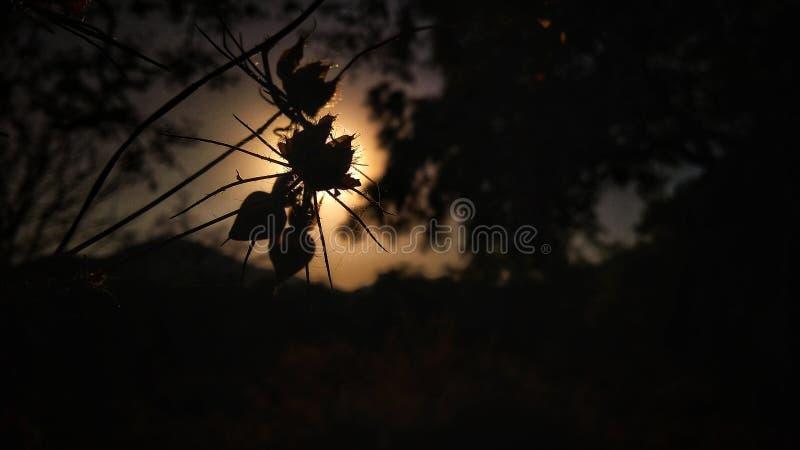 Juego con la luz y la sombra imagenes de archivo