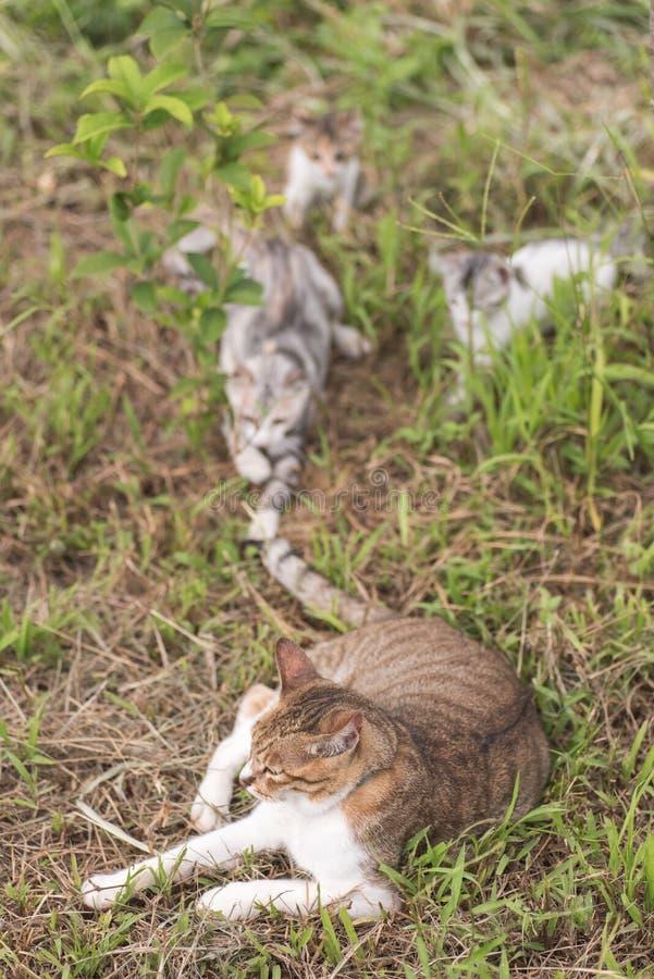 Juego de la familia de gatos imagenes de archivo
