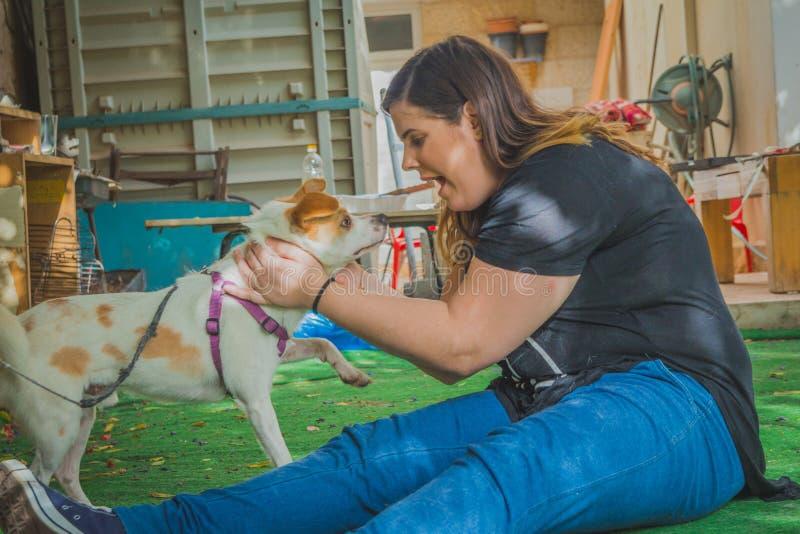 Juego de la mujer joven con el perro del terrier de Russell del enchufe en el patio trasero fotos de archivo