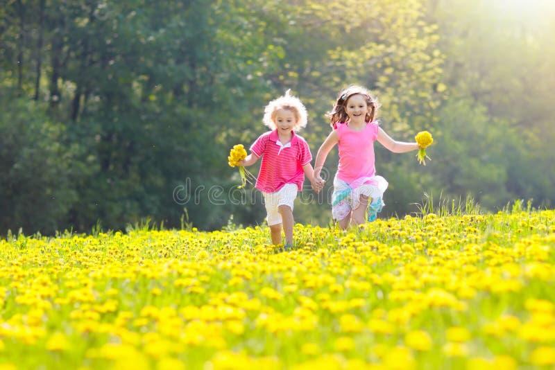 Juego de los niños Niño en campo del diente de león Flor del verano foto de archivo