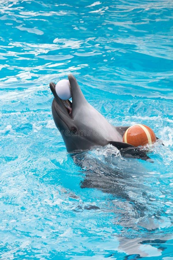 Juego del delfín en piscina imagenes de archivo