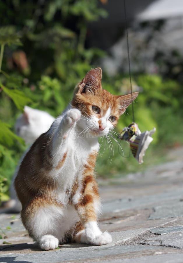 Juego del gato imagen de archivo libre de regalías