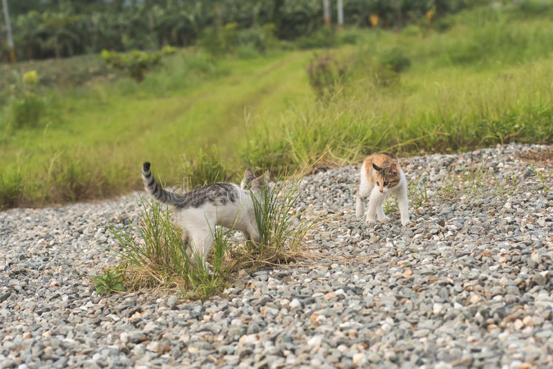 Juego del gato en el al aire libre foto de archivo