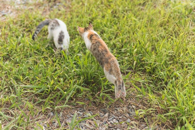 Juego del gato en el al aire libre imagen de archivo
