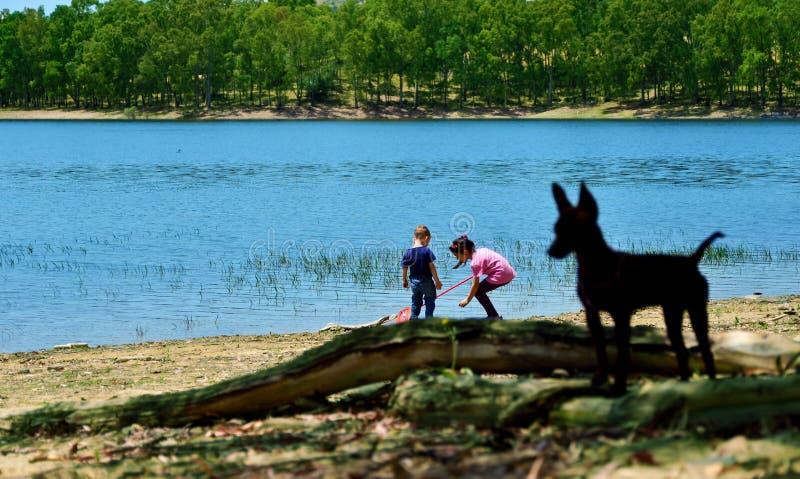 Juego en el lago fotos de archivo libres de regalías