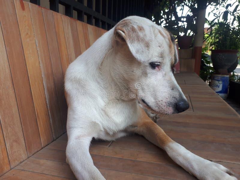 Juego lindo blanco del perro de Brown foto de archivo libre de regalías
