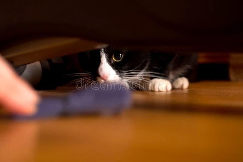 Juegos blancos y negros de un gato con el dueño Gato debajo del sofá fotos de archivo