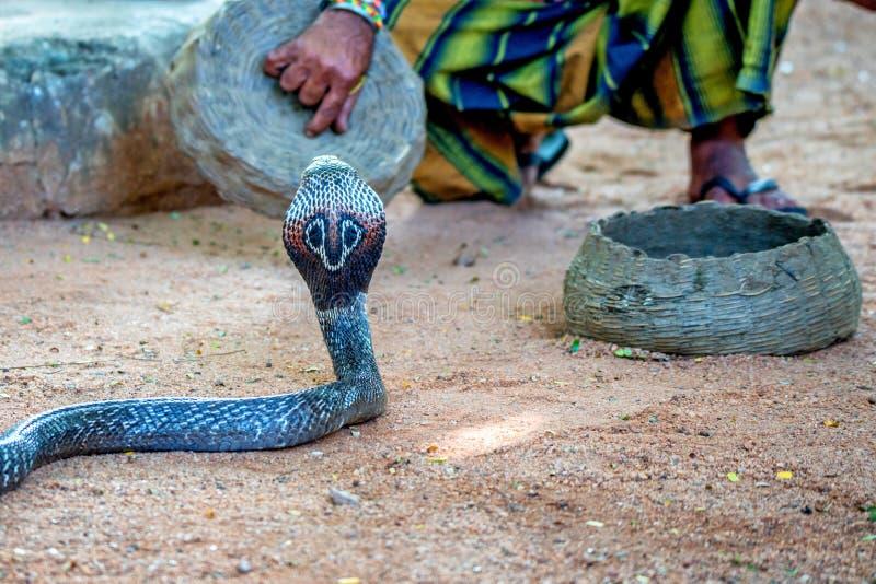 Juegos del encantador de serpiente con la cobra india imagenes de archivo