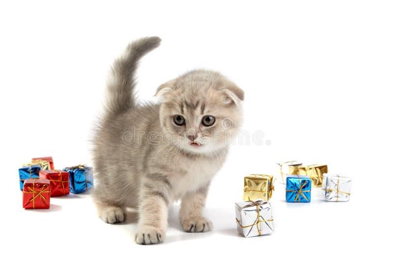 Download Juegos Del Gatito Con Los Rectángulos De Regalo Foto de archivo - Imagen de aislado, gato: 7277474