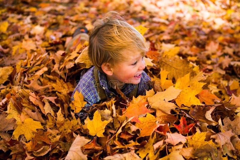 Juegos del niño en la sonrisa de las hojas foto de archivo libre de regalías