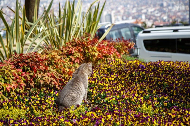 Juegos y cazas del gato en flores imagen de archivo