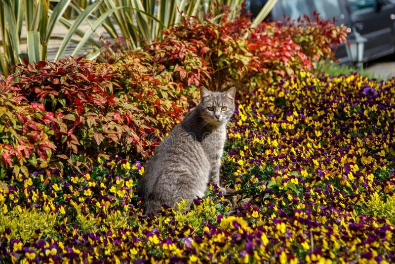 Juegos y cazas del gato en flores foto de archivo libre de regalías