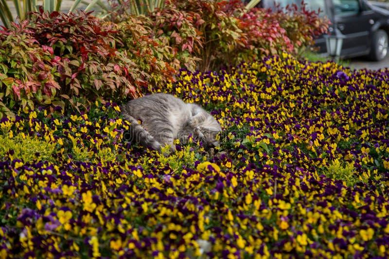 Juegos y cazas del gato en flores imagen de archivo libre de regalías