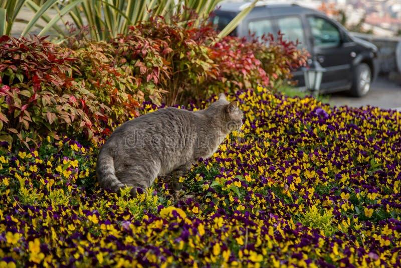 Juegos y cazas del gato en flores foto de archivo