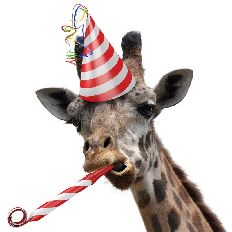 Juerguista divertido de la jirafa que hace una cara tonta y que sopla un noisemaker imagen de archivo