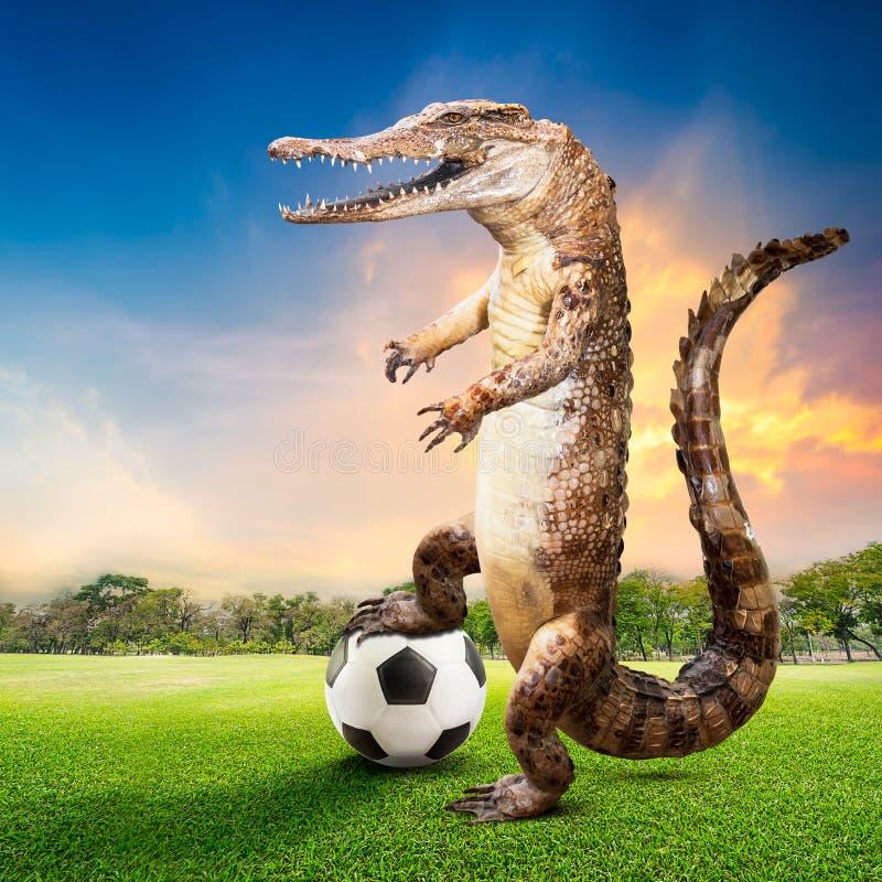 Jugador de fútbol del cocodrilo fotografía de archivo libre de regalías