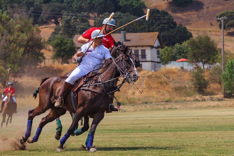 Jugadores de polo que montan a caballo después de la bola de polo en la velocidad imagen de archivo
